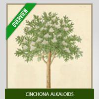 Cinchona Alkaloids